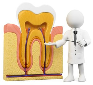 Endodontist - Root Canal